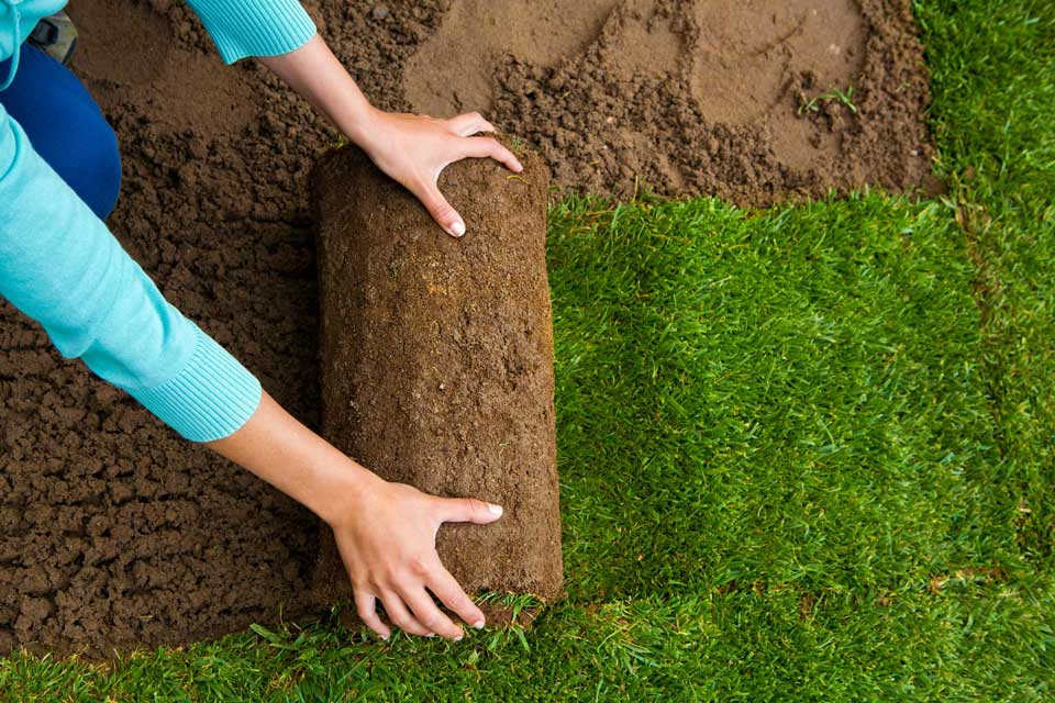 Kingsport Landscaping sod and grass