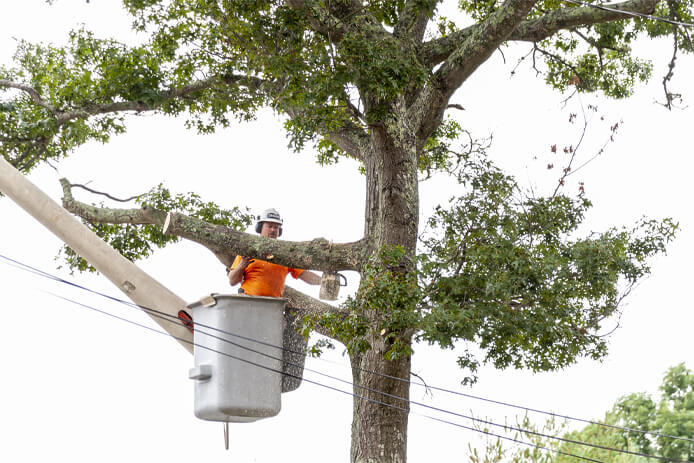 tree trimming kingsport landscaping