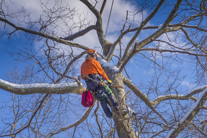 tree removal kingsport landscaping